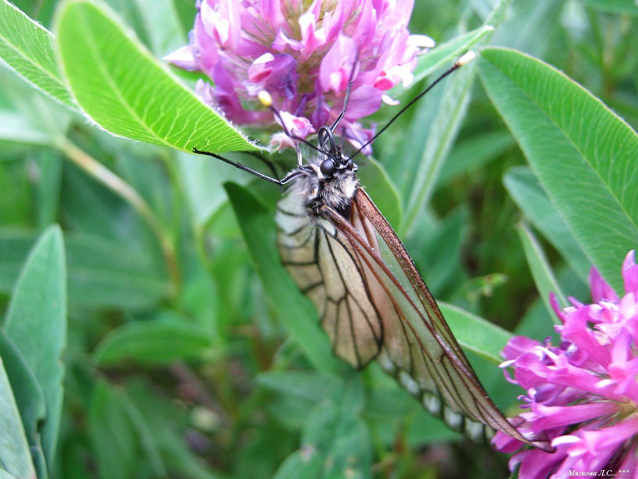 00 бабочки _5853.jpg