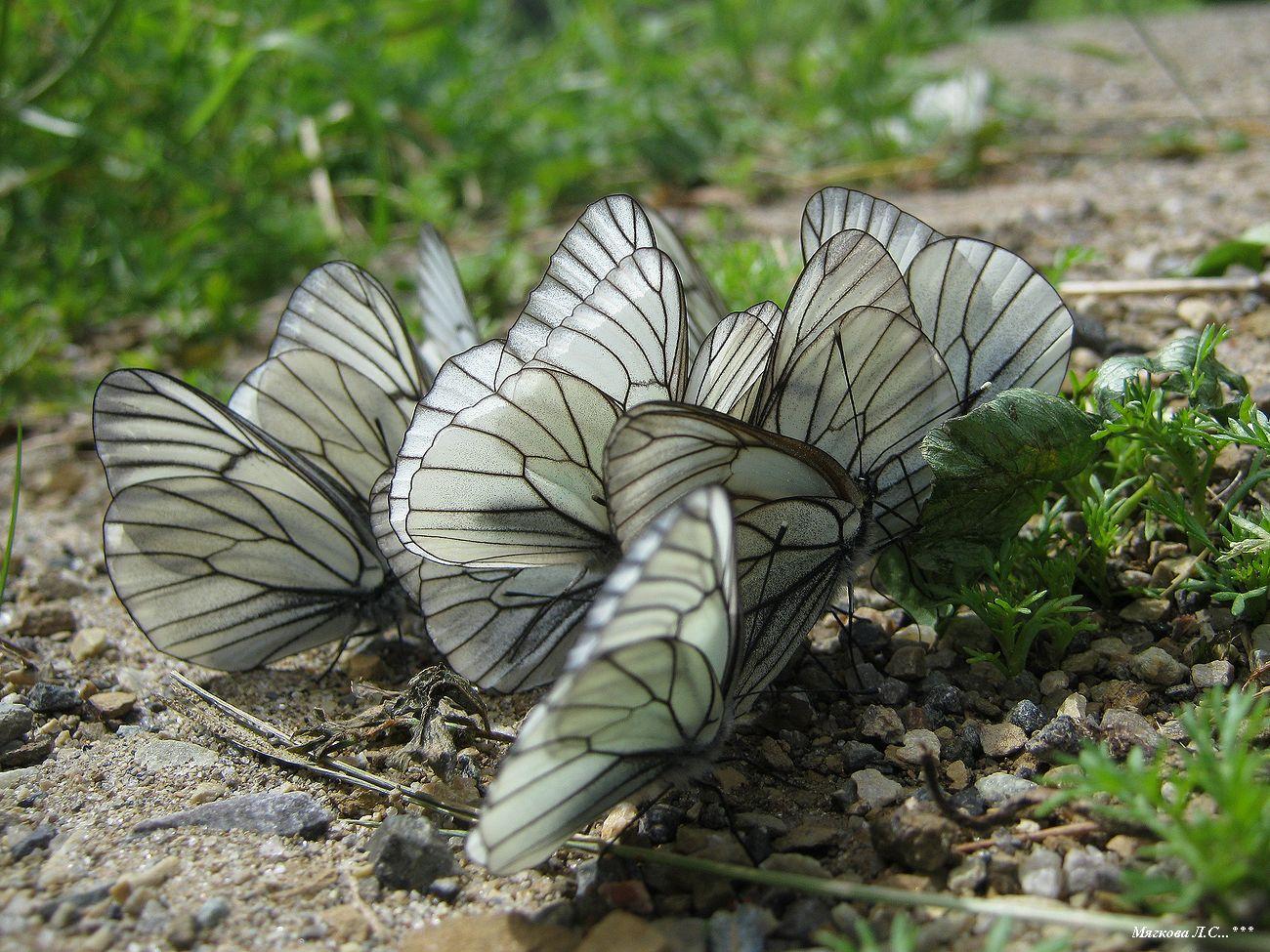 00 бабочки _5874.jpg