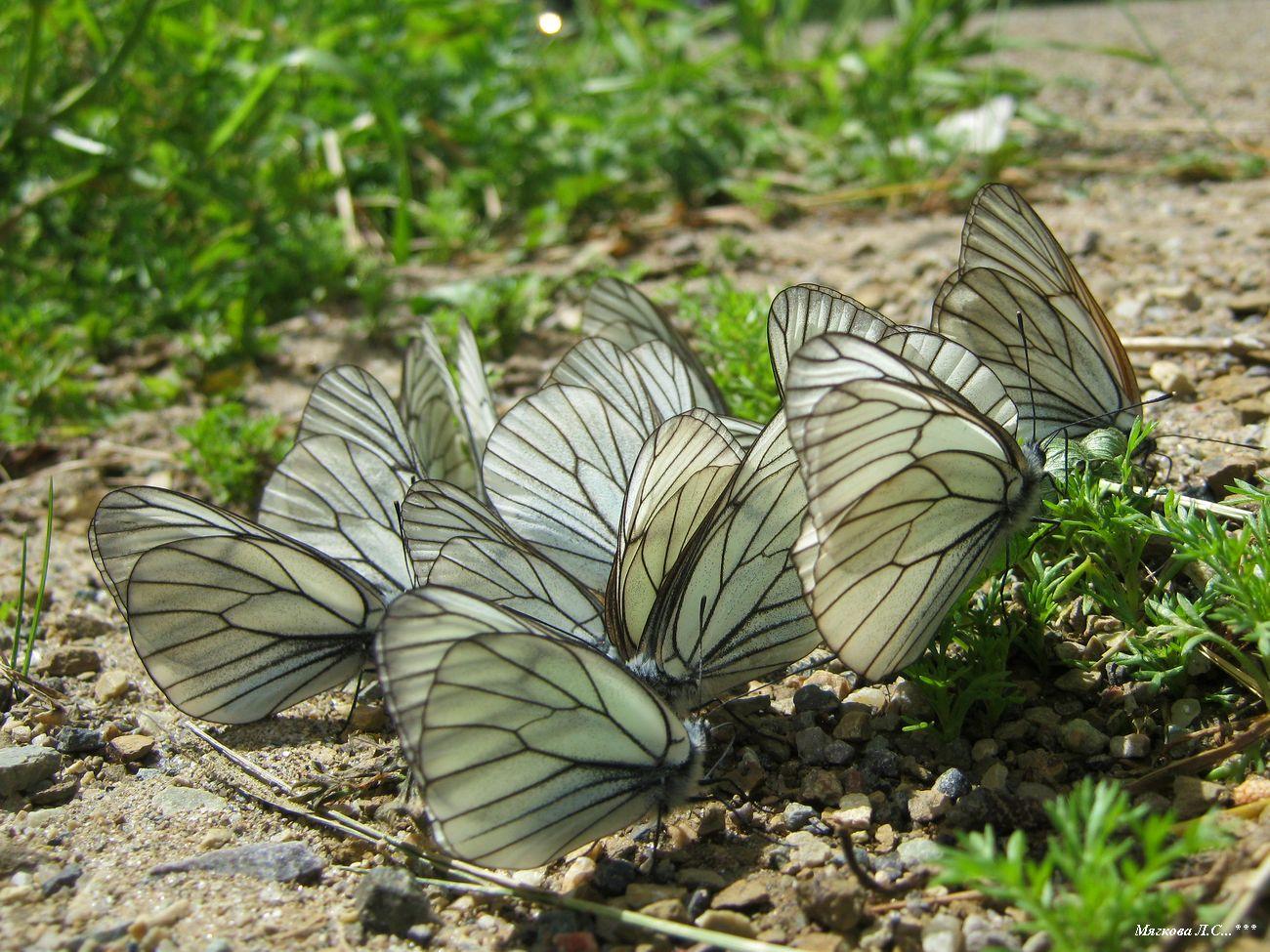00 бабочки _5879.jpg