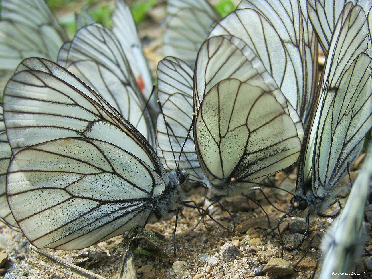00 бабочки _5883.jpg