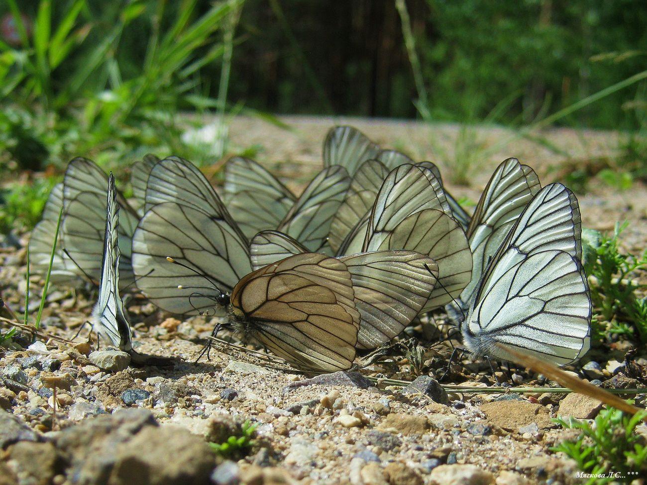 00 бабочки _5915.jpg