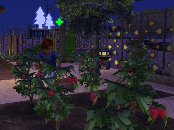 Sims Wk 4 42