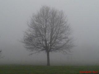 За этим деревом - поле и полоса посадок (похожих на те, что я видела из московских окон)