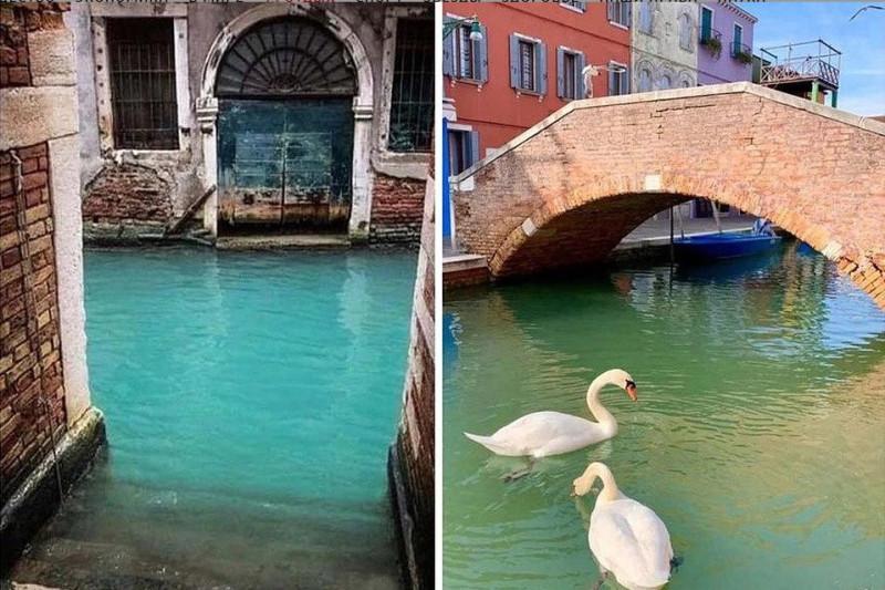 Чистая вода Венеции