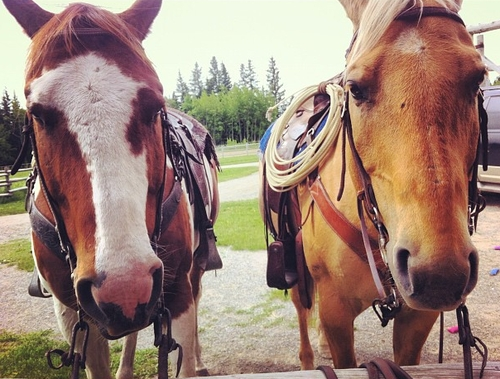 """Heartland and """"The Horse With No Name"""" - Chris Potter ..."""