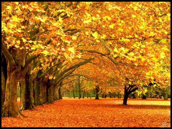 1316141835_1221079395_the_break_of_autumn_by_inextremo