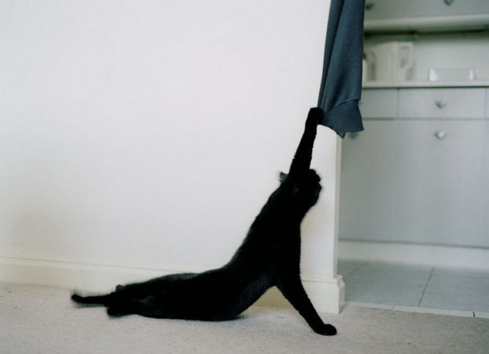 cats_06