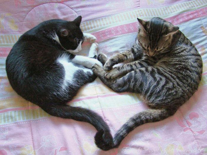 cats_12
