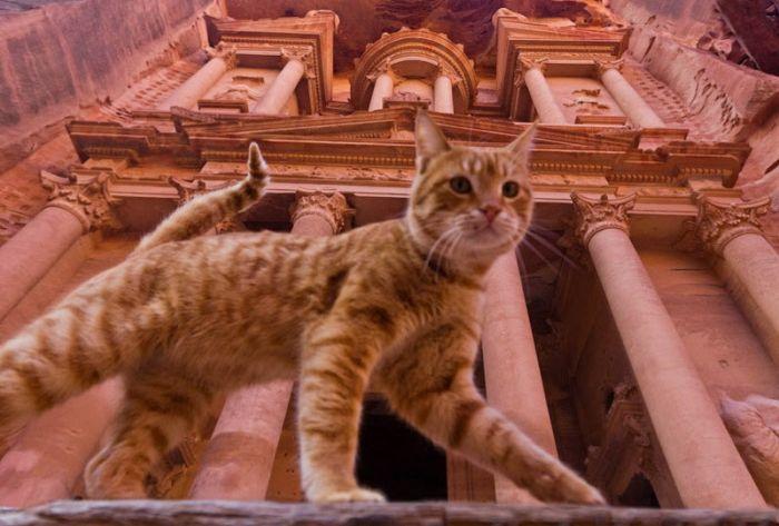 cats_23