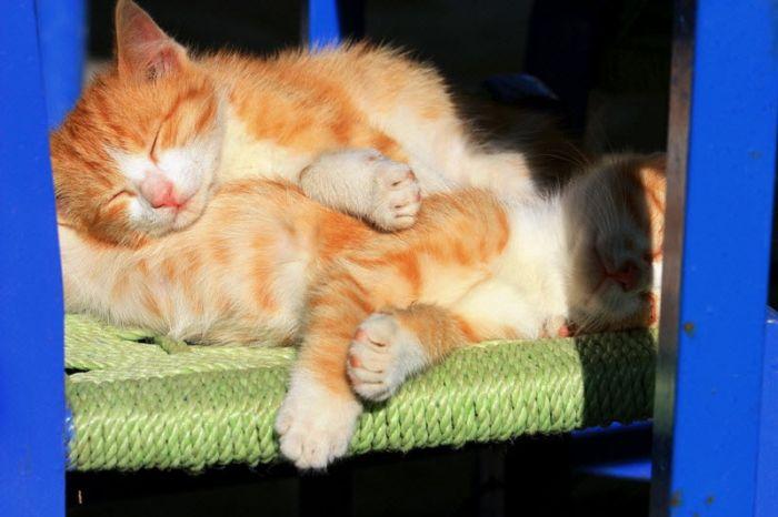 cats_24