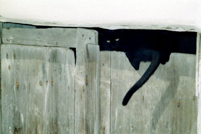 cats_27