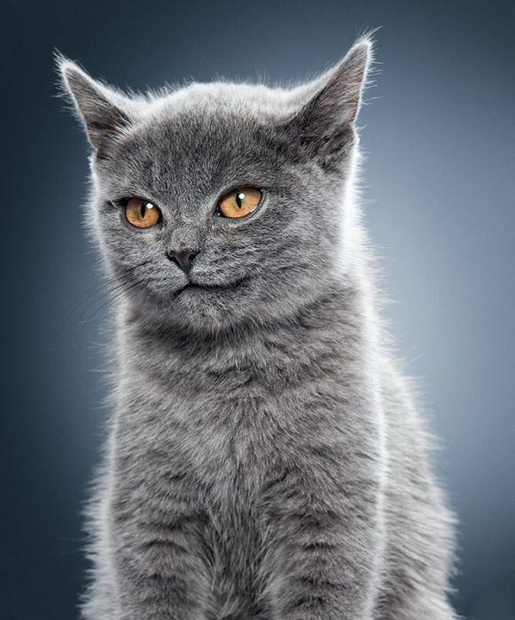 cats_29