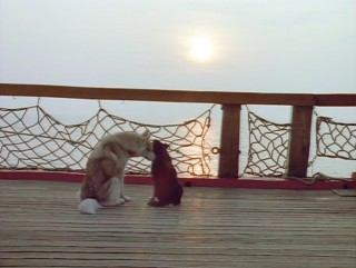 Dief and Dog-MotB