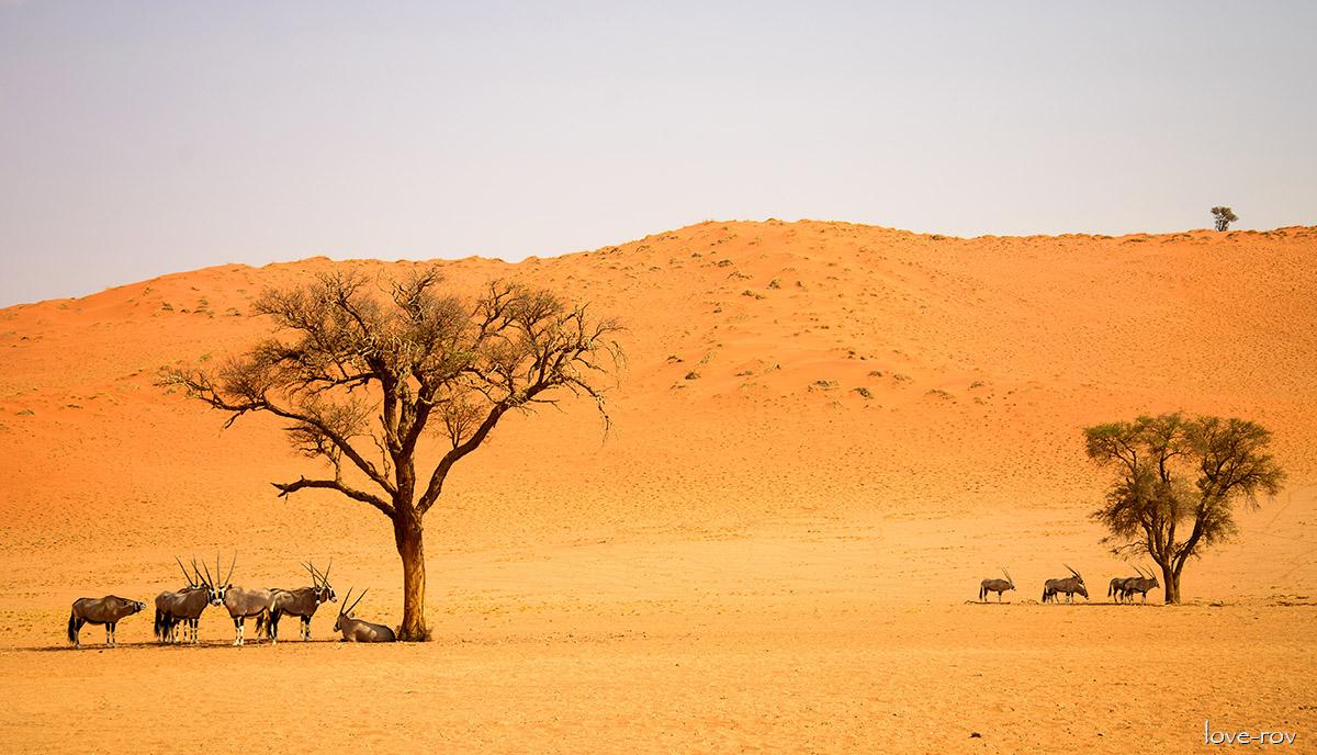 Большое Южное Путешествие. Южная Африка
