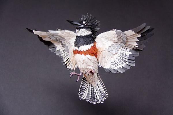 diana-beltran-herrera, belted woodpecker