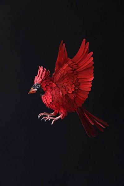 diana-beltran-herrera, cardinal