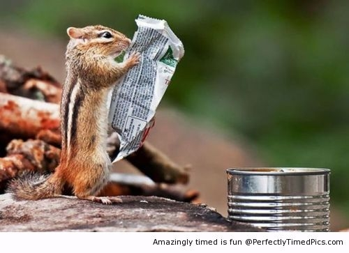Chipmunk-likes-reading-the-news-resizecrop--