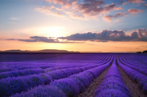 Sunset over Valensole r