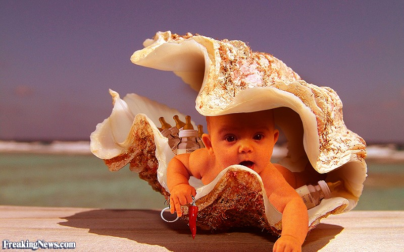 Baby-Inside-a-Clam-Shell