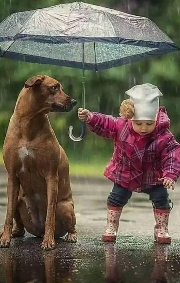 дети + животные