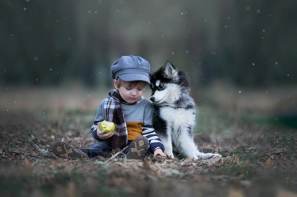 дети + животные 2