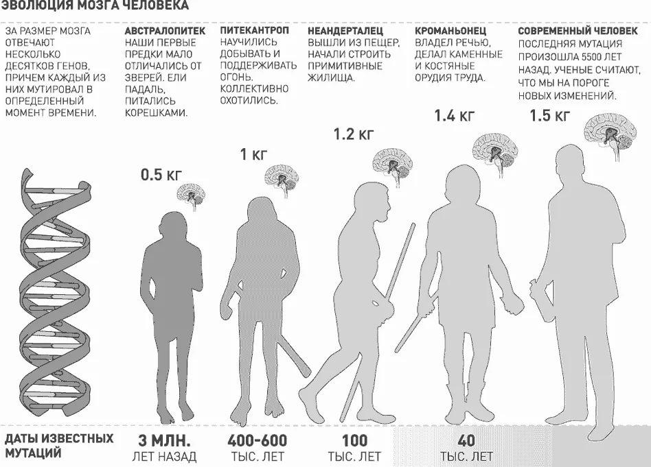эволюция мозга