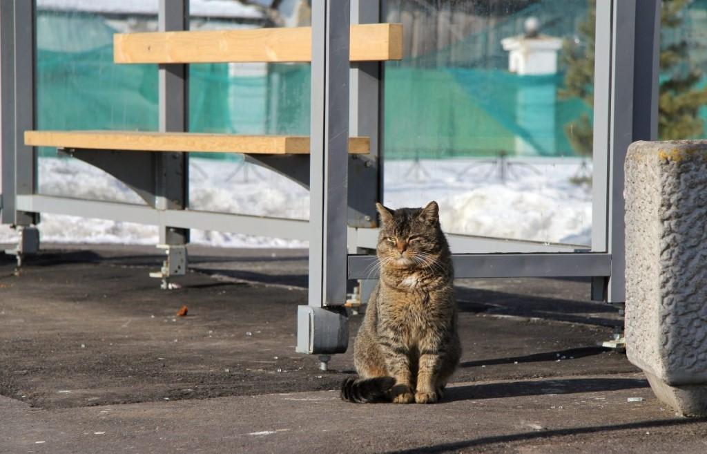 кошка на остановке