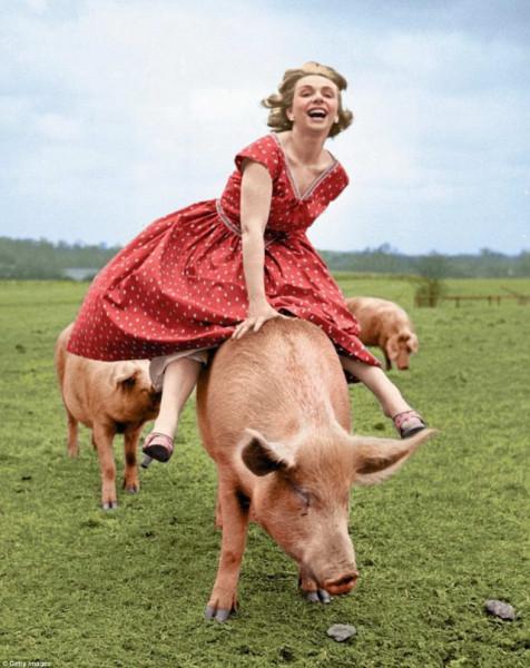 верхом на свинье