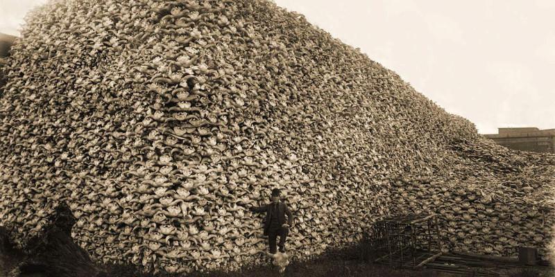 черепа убитых животных