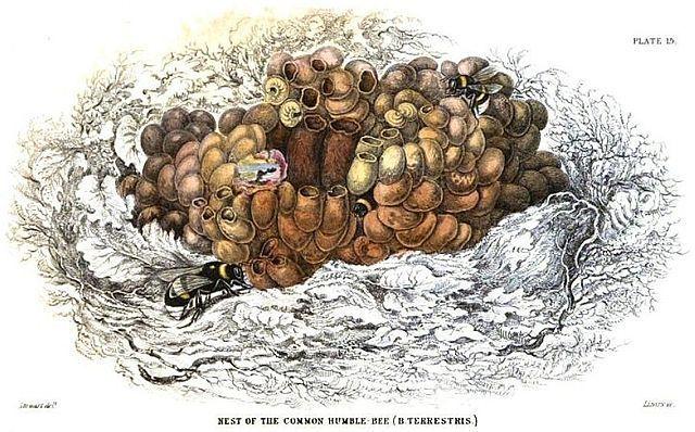 пчелиные яйца