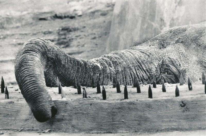 Фото Игоря Стомахина, Слон в московском зоопарке, 1982.