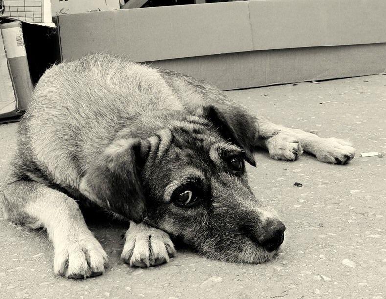 бездомный пёс