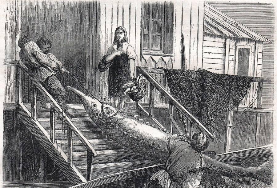 Рыбацкий промысел, гравюра 1867 г. Из книги А.Дюма-отца о поездке по России.