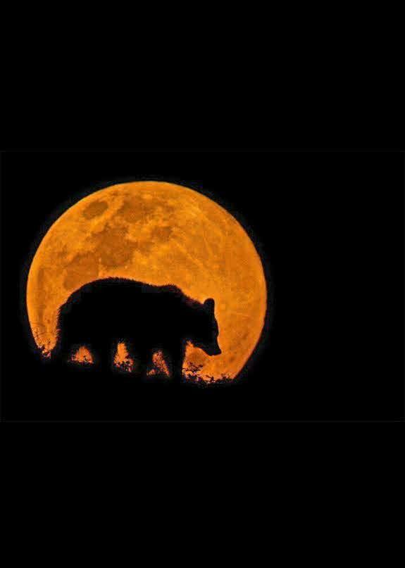 медведица и луна