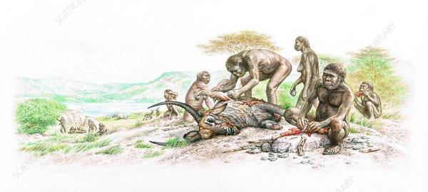 Homo_habilis_butchering_an_antelop