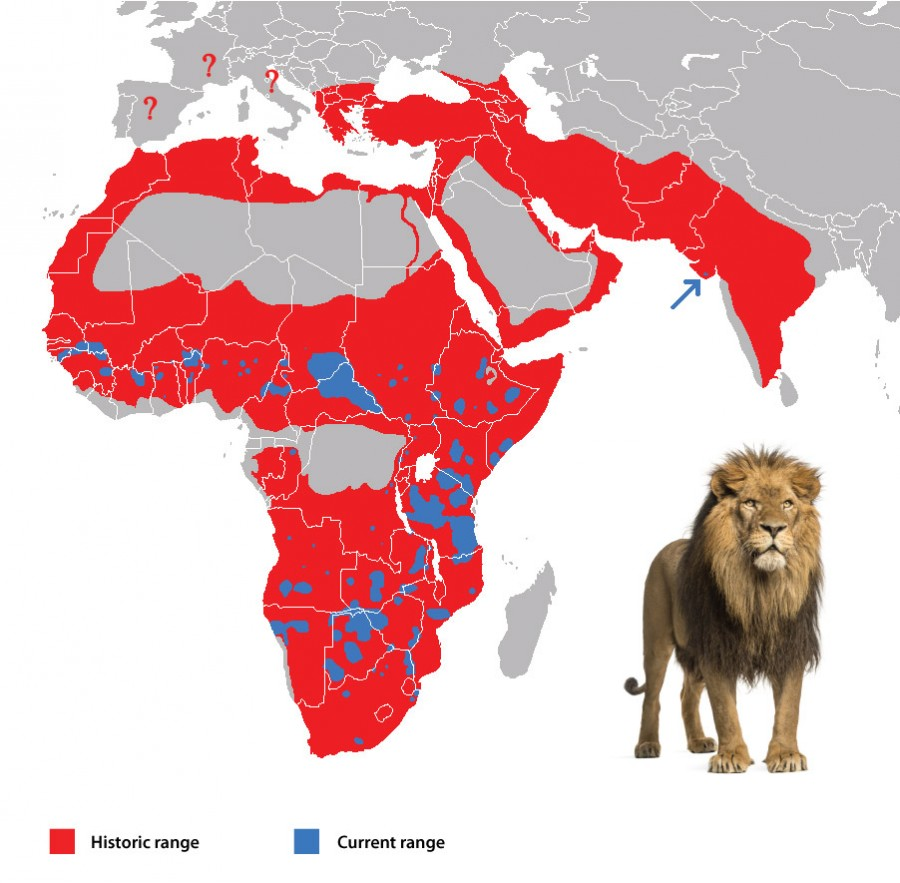 Ареал обитания львов в древности и теперь.