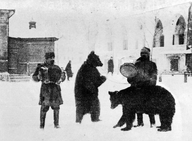 Вожаки медведей в Калуге