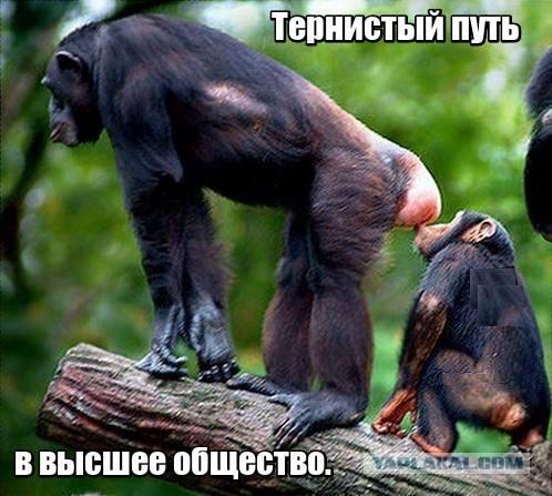 подражание обезьянам