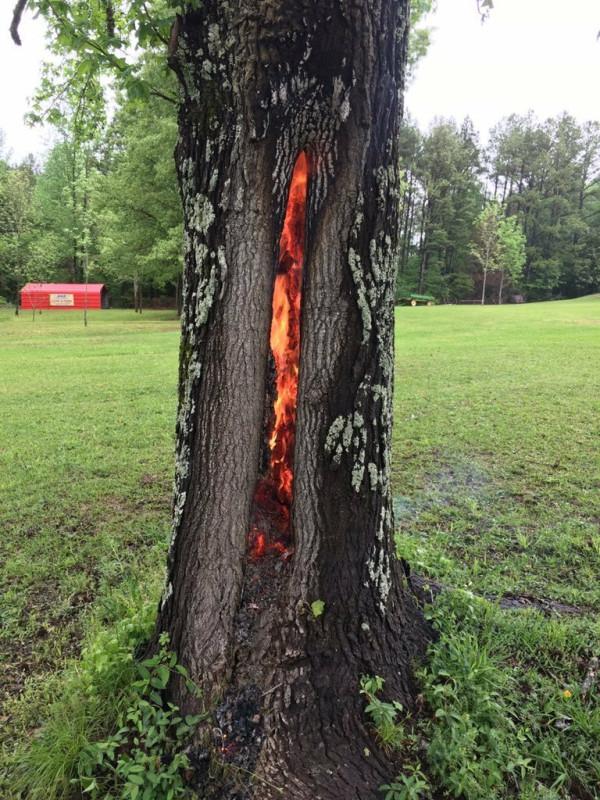 горение дерева изнутри после удара молнии