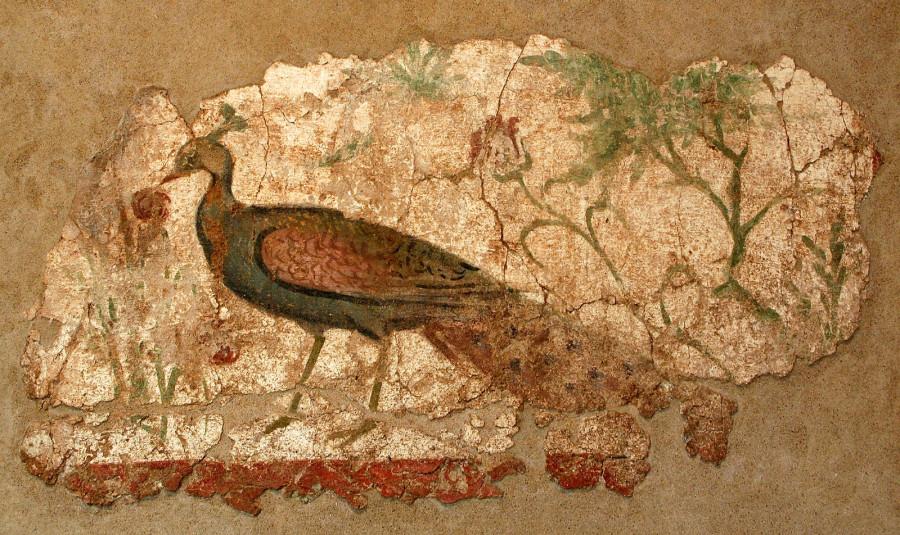 Павлин на фресках Помпеи