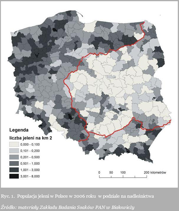 Популяция оленей в Польше