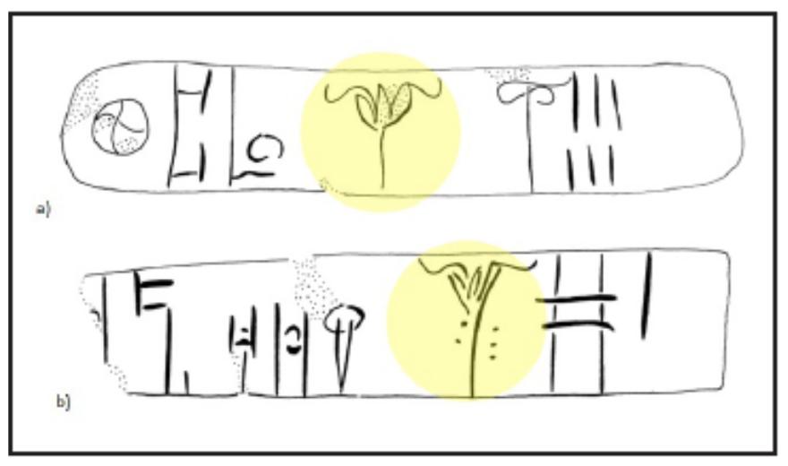 saffron linear b