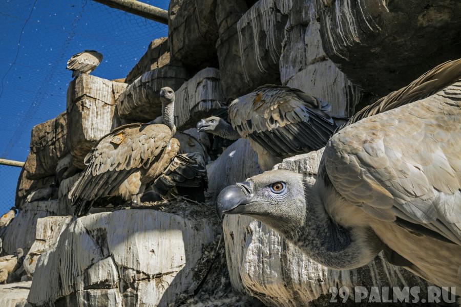 Пожиратели мертвых. Фото Чарли Гамильтон Джеймс - National Geographic