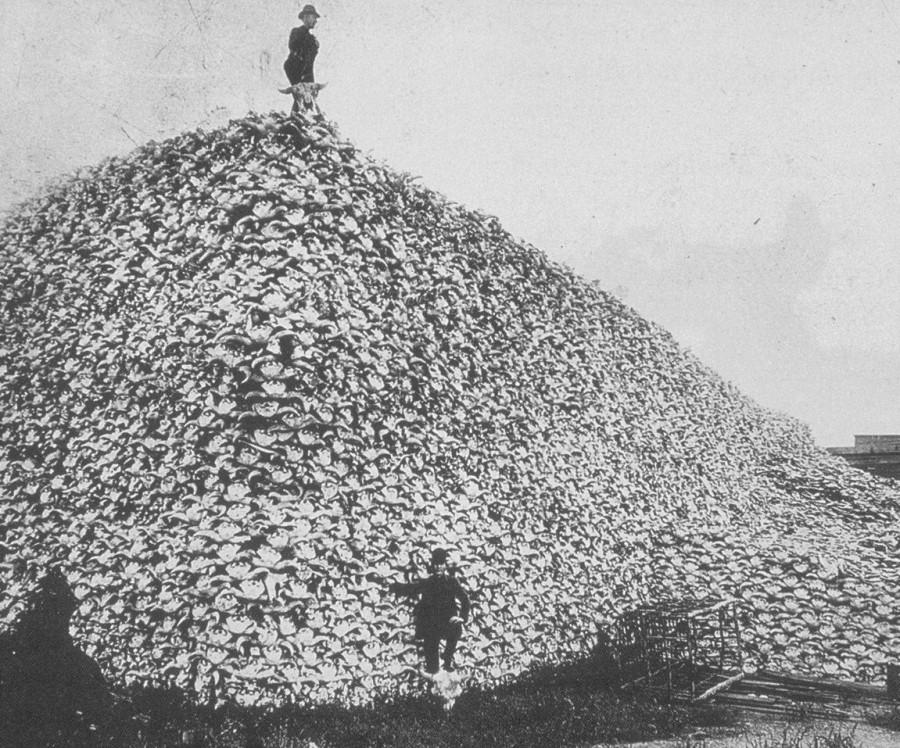 Гора черепов бизонов 1870 год