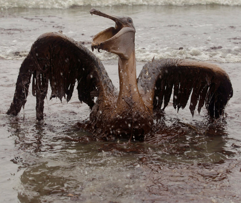 oil_and_fauna.00