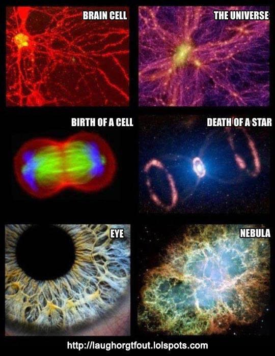 Космос - живой организм 2