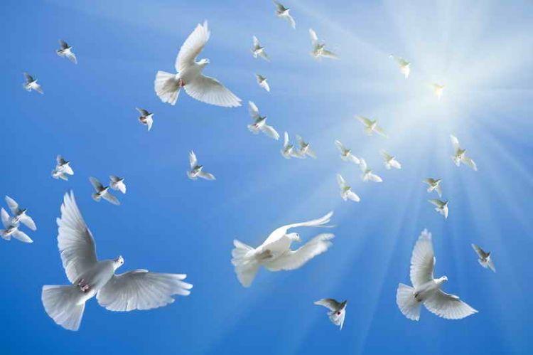 Голуби в небе 2
