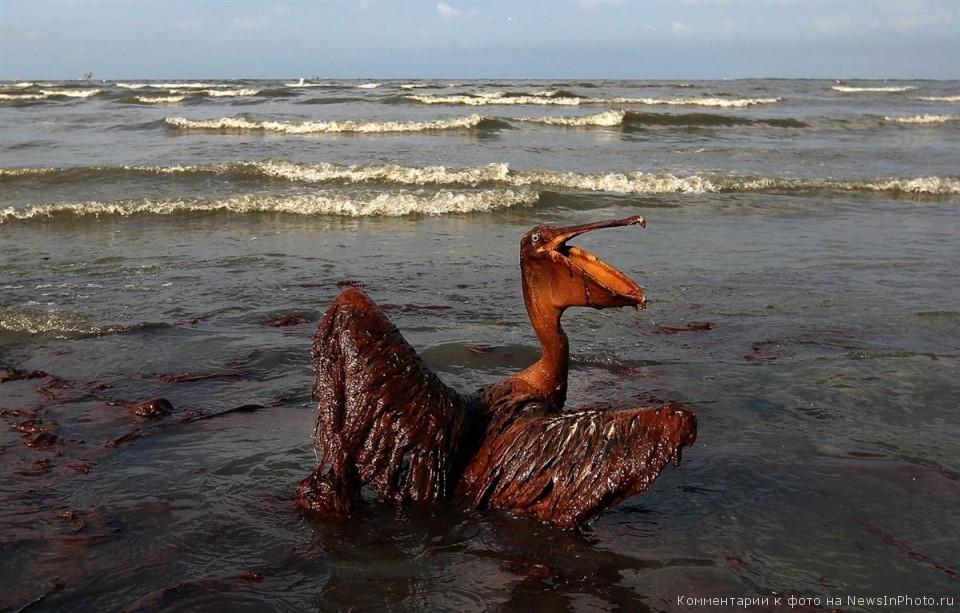 Последствия-разлива-нефти-BP-в-Мексиканском-заливе-по-прошествии-года-18-960x613