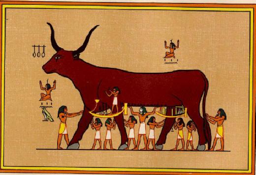 Нут Небесная Корова