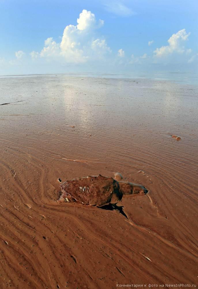Последствия-разлива-нефти-BP-в-Мексиканском-заливе-по-прошествии-года-24